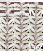 MihaNika69_-__PornHubPremium__-_Caressed_Pink_Pussy_and_Sat_on_his_Cock_Narrow_Ass_-_Anal_Sex_Closeup_-_1080p.mp4.jpg